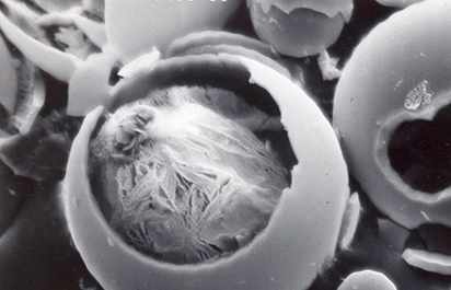 Surface Modification of Hollow Glass Microspheres