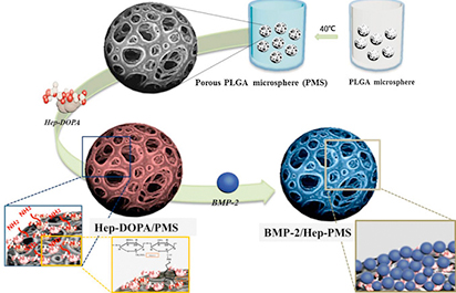 Using Porous Hollow Glass Microspheres for Targeted Drug Delivery